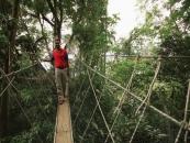 マレーシア森林研究所(フリム)